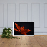 Orange Lily with Back light Floral Nature Photo Framed Wall Art Print White / 24×36 - PIPAFINEART