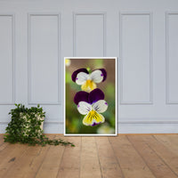 Pretty Little Violets Floral Nature Photo Framed Wall Art Print White / 24×36 - PIPAFINEART