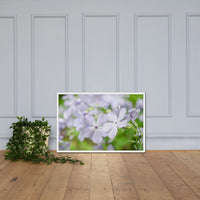 Soft Focus Phlox Carolina Floral Nature Photo Framed Wall Art Print White / 24×36 - PIPAFINEART