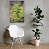 Growth of the Forest Floor Botanical Nature Canvas Wall Art Prints 24×36 - PIPAFINEART