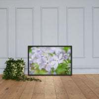 Soft Focus Phlox Carolina Floral Nature Photo Framed Wall Art Print Black / 24×36 - PIPAFINEART
