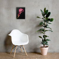 Pink Calla Lily Flower on Black Floral Nature Canvas Wall Art Prints 12×16 - PIPAFINEART