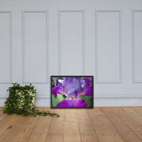 Glowing Iris Floral Nature Photo Framed Wall Art Print Black / 18×24 - PIPAFINEART