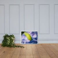 Actias Luna Larvae on Hydrangea Floral Nature Photo Framed Wall Art Print White / 18×24 - PIPAFINEART