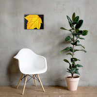 Brilliant Yellow Botanical Nature Canvas Wall Art Prints 12×16 - PIPAFINEART