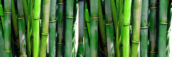 Bamboo products reduce plastic