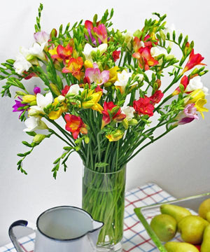Luxury Long Stem Freesias - Fineflora Flowers