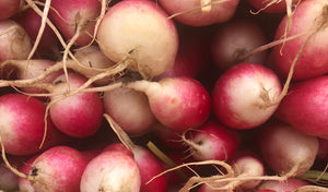 Featured Vegetable: Radishes