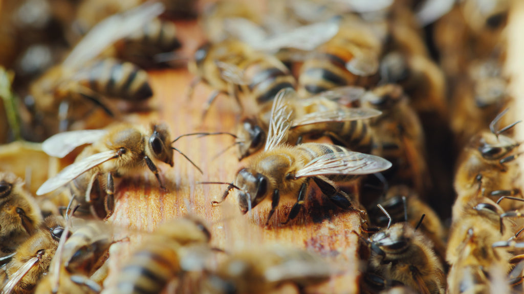 10 Things You May Not Know About Bees