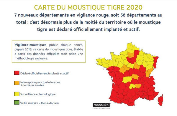 article-image-moustique-tigre