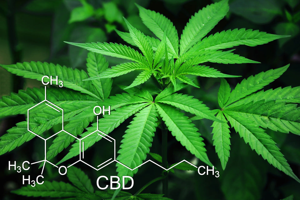CBD Chemical Composition