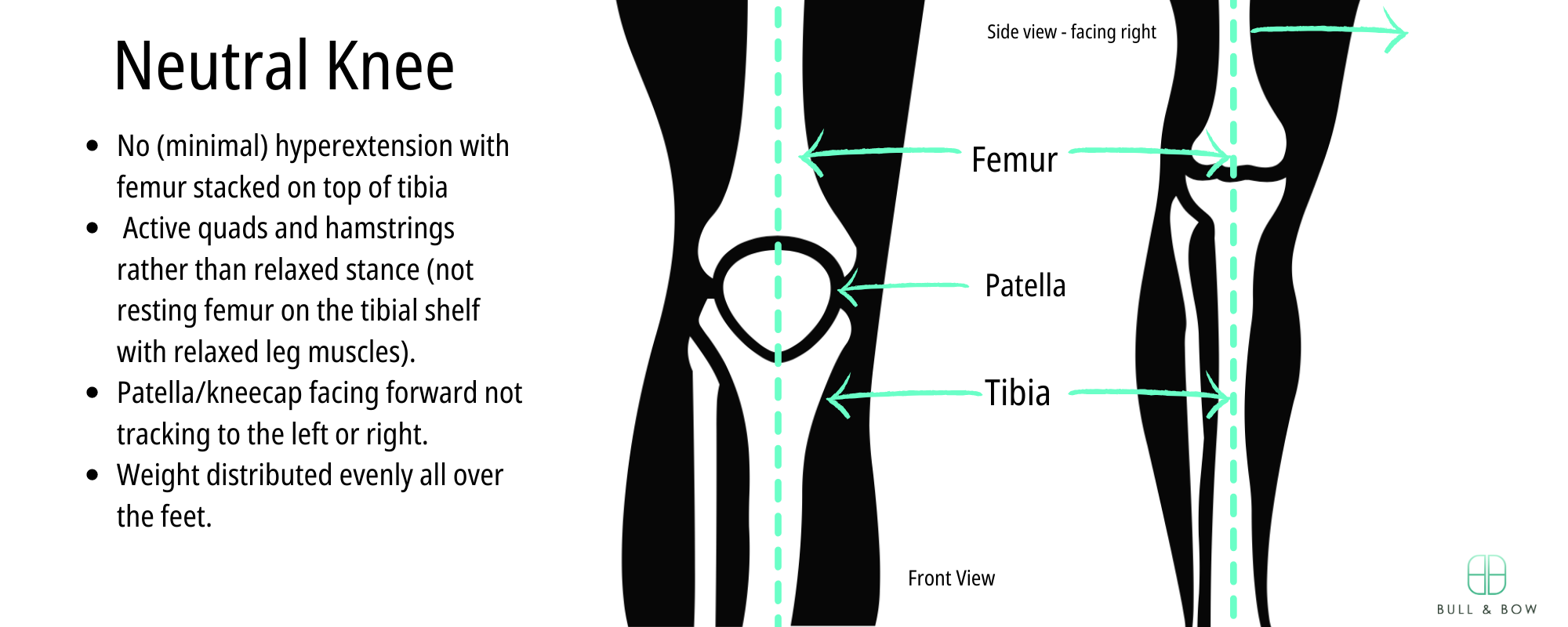 Neutral or locked knee description with side and front view of knee joint.