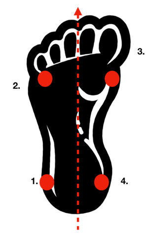 Graphic of foot showing midline and four equal distribution lines.