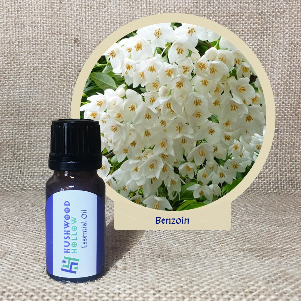 Benzoin 20% tincture - Pure Therapeutic Grade Essential Oil - Hushwood Hollow