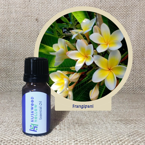Frangipani 100% - Pure Therapeutic Grade Essential Oil - Hushwood Hollow