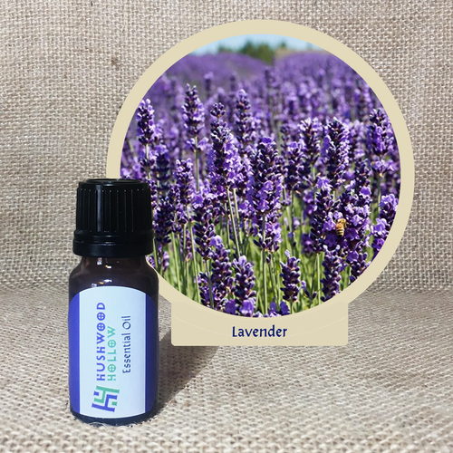 Lavender - Pure Therapeutic Grade Essential Oil - Hushwood Hollow