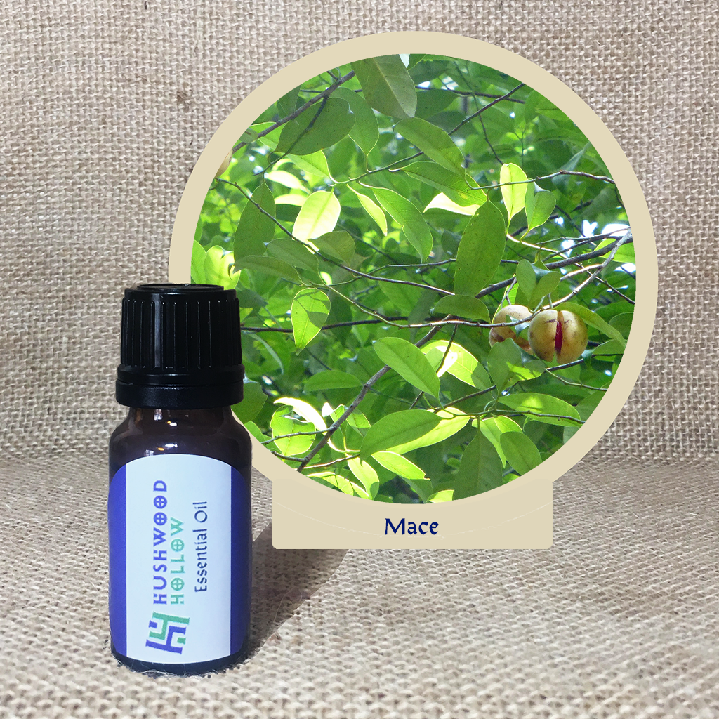 Mace - Pure Therapeutic Grade Essential Oil - Hushwood Hollow