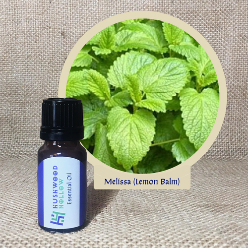 Melissa (Lemon Balm) - Pure Therapeutic Grade Essential Oil - Hushwood Hollow