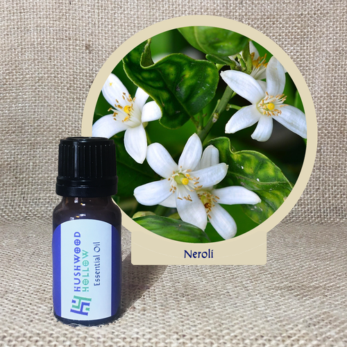 Neroli 100% - Pure Therapeutic Grade Essential Oil - Hushwood Hollow
