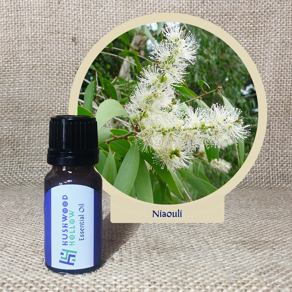 Niaouli - Pure Therapeutic Grade Essential Oil