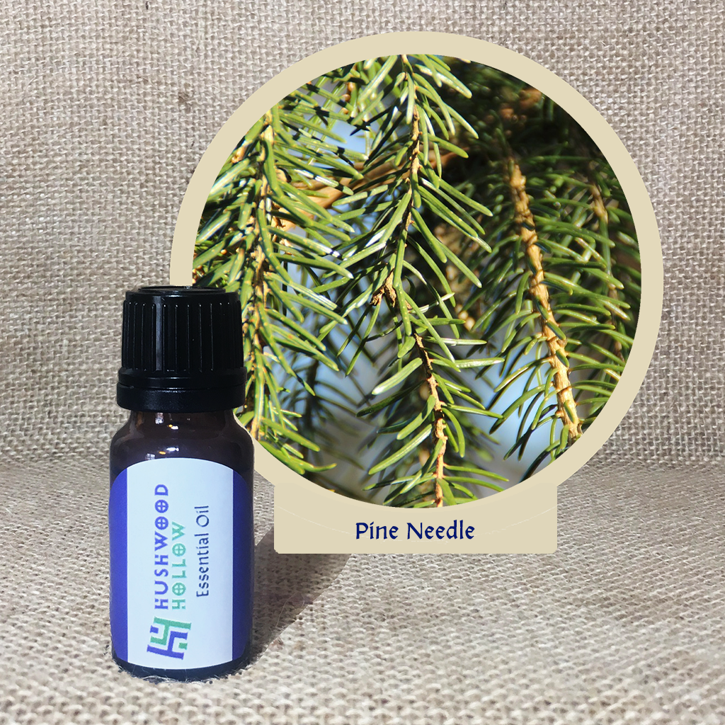 Pine Needle - Pure Therapeutic Grade Essential Oil - Hushwood Hollow