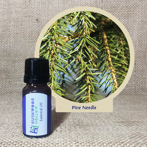 Pine Needle - 20% perfumery tincture