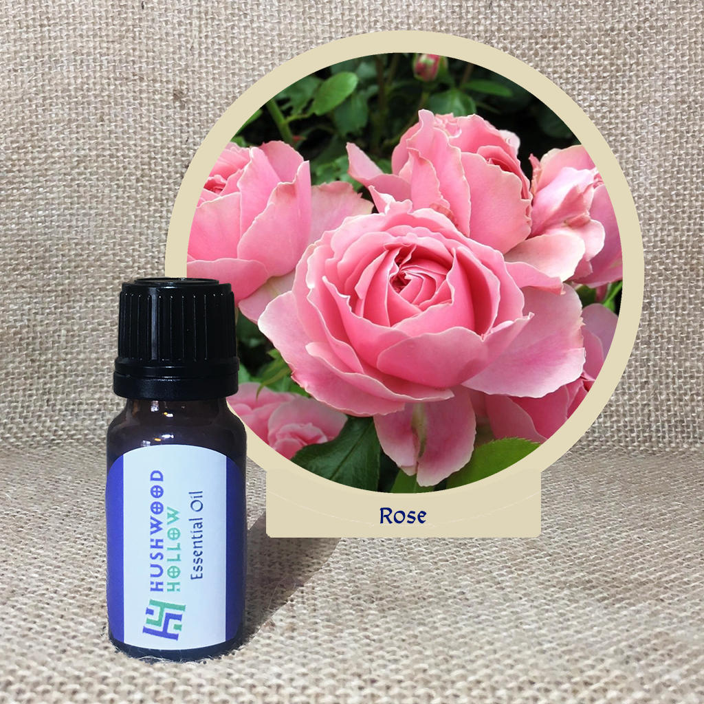 Rose 100% - Pure Therapeutic Grade Essential Oil - Hushwood Hollow