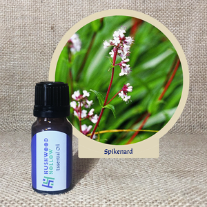 Spikenard - Pure Therapeutic Grade Essential Oil - Hushwood Hollow