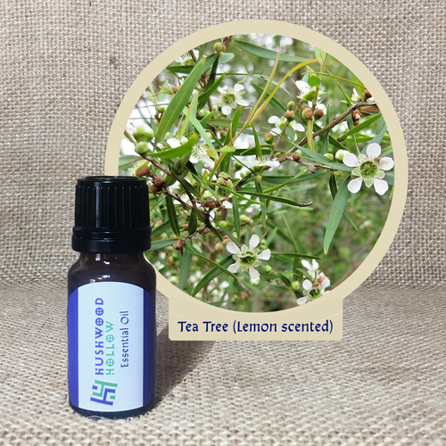 Tea Tree (lemon scented) - Pure Therapeutic Grade Essential Oil - Hushwood Hollow