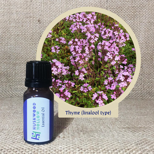 Thyme (linalool type) - Pure Therapeutic Grade Essential Oil - Hushwood Hollow