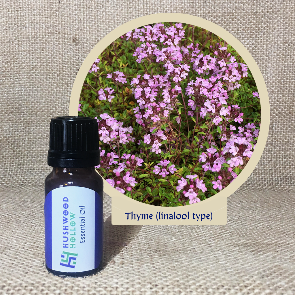 Thyme (linalool type) - Pure Therapeutic Grade Essential Oil