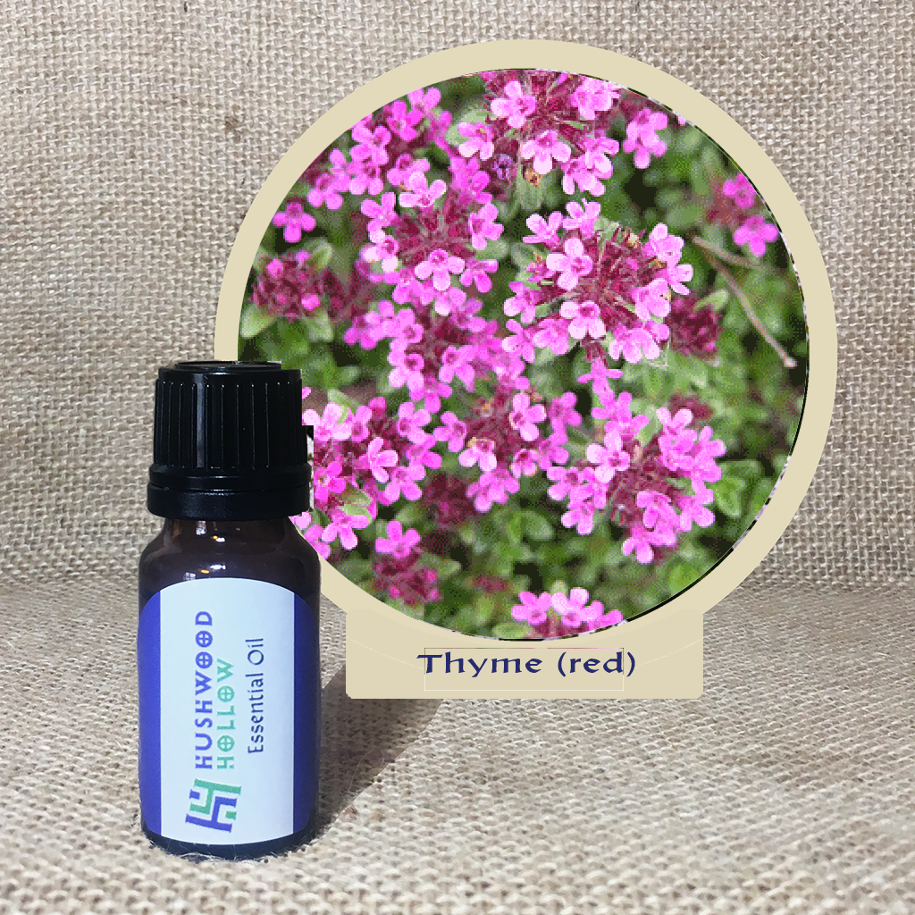 Thyme (red) - Pure Therapeutic Grade Essential Oil - Hushwood Hollow