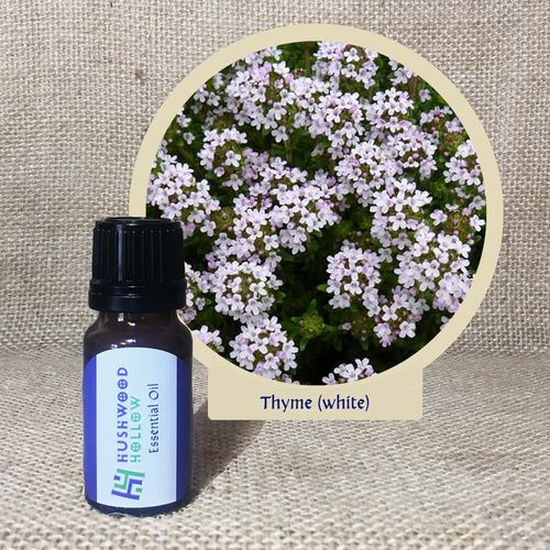 Thyme (white) - Pure Therapeutic Grade Essential Oil - Hushwood Hollow