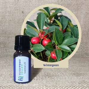 Wintergreen - 20% perfumery tincture