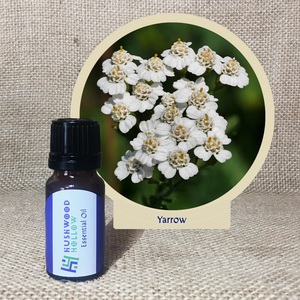 Yarrow 100% - Pure Therapeutic Grade Essential Oil - Hushwood Hollow