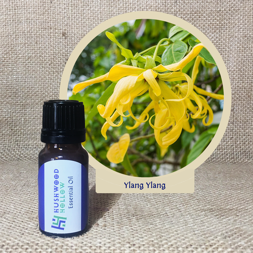 Ylang Ylang - Pure Therapeutic Grade Essential Oil - Hushwood Hollow