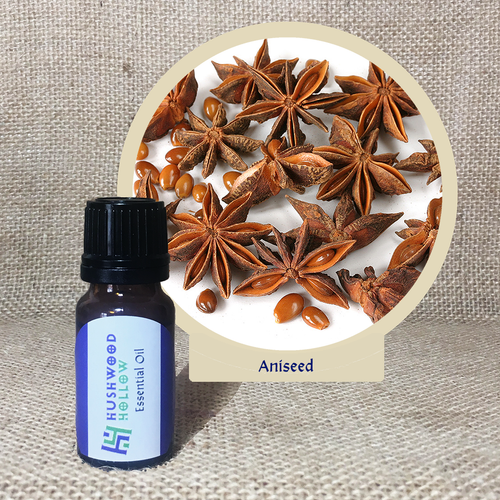 Aniseed - Pure Therapeutic Grade Essential Oil - Hushwood Hollow