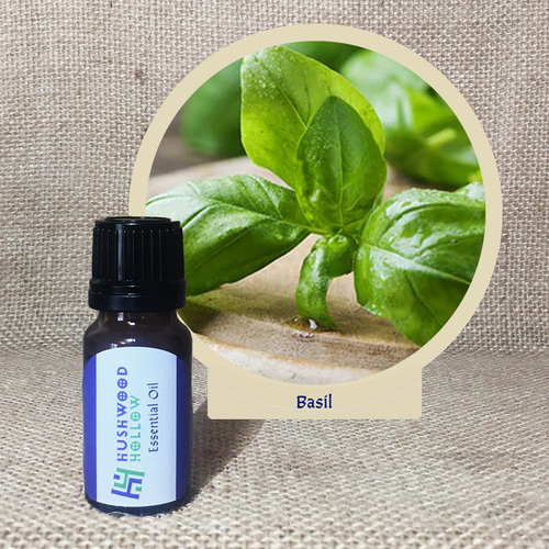 Basil - Pure Therapeutic Grade Essential Oil - Hushwood Hollow