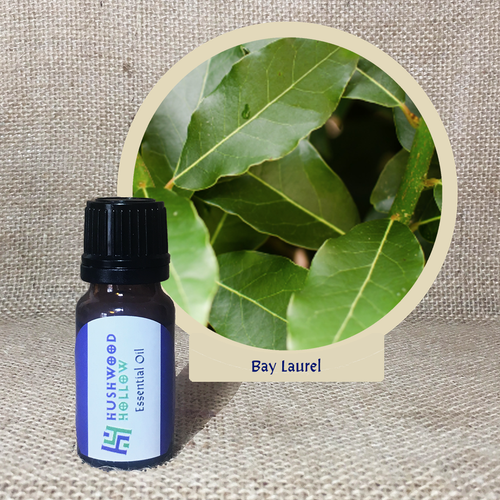 Bay Laurel - Pure Therapeutic Grade Essential Oil - Hushwood Hollow