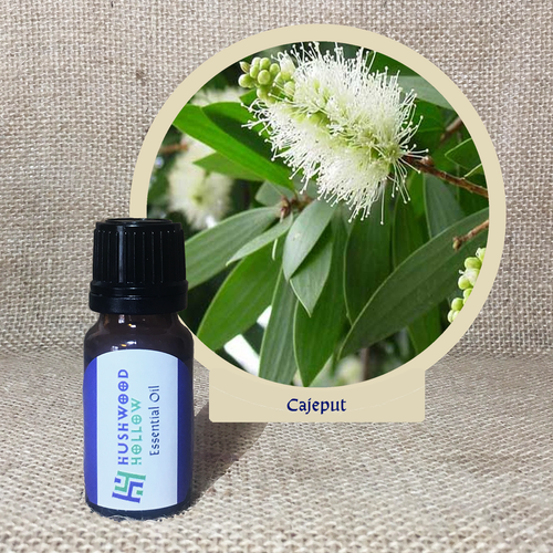 Cajeput - Pure Therapeutic Grade Essential Oil - Hushwood Hollow