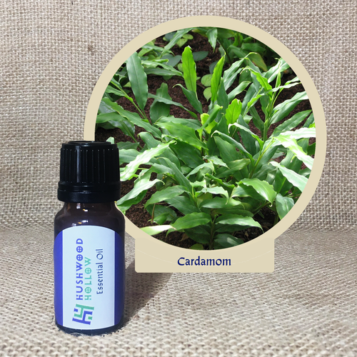 Cardamom - Pure Therapeutic Grade Essential Oil - Hushwood Hollow