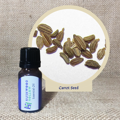 Carrot Seed 5% - Pure Therapeutic Grade Essential Oil - Hushwood Hollow