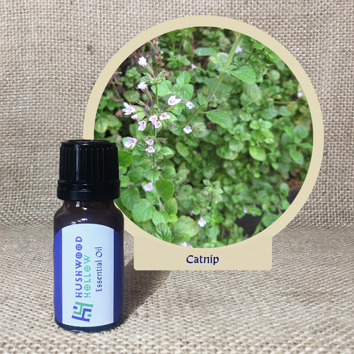 Catnip - Pure Therapeutic Grade Essential Oil - Hushwood Hollow