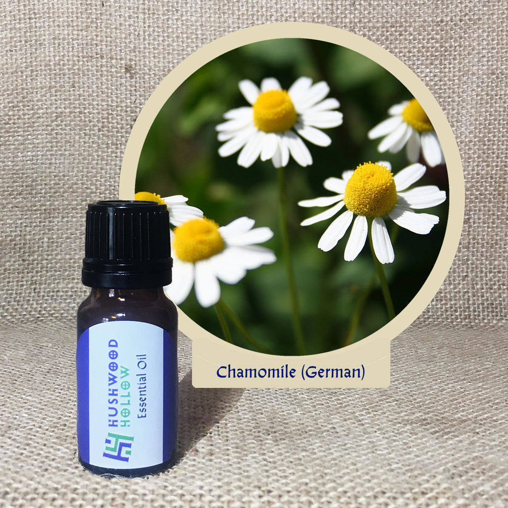 Chamomile German 5% - Pure Therapeutic Grade Essential Oil - Hushwood Hollow