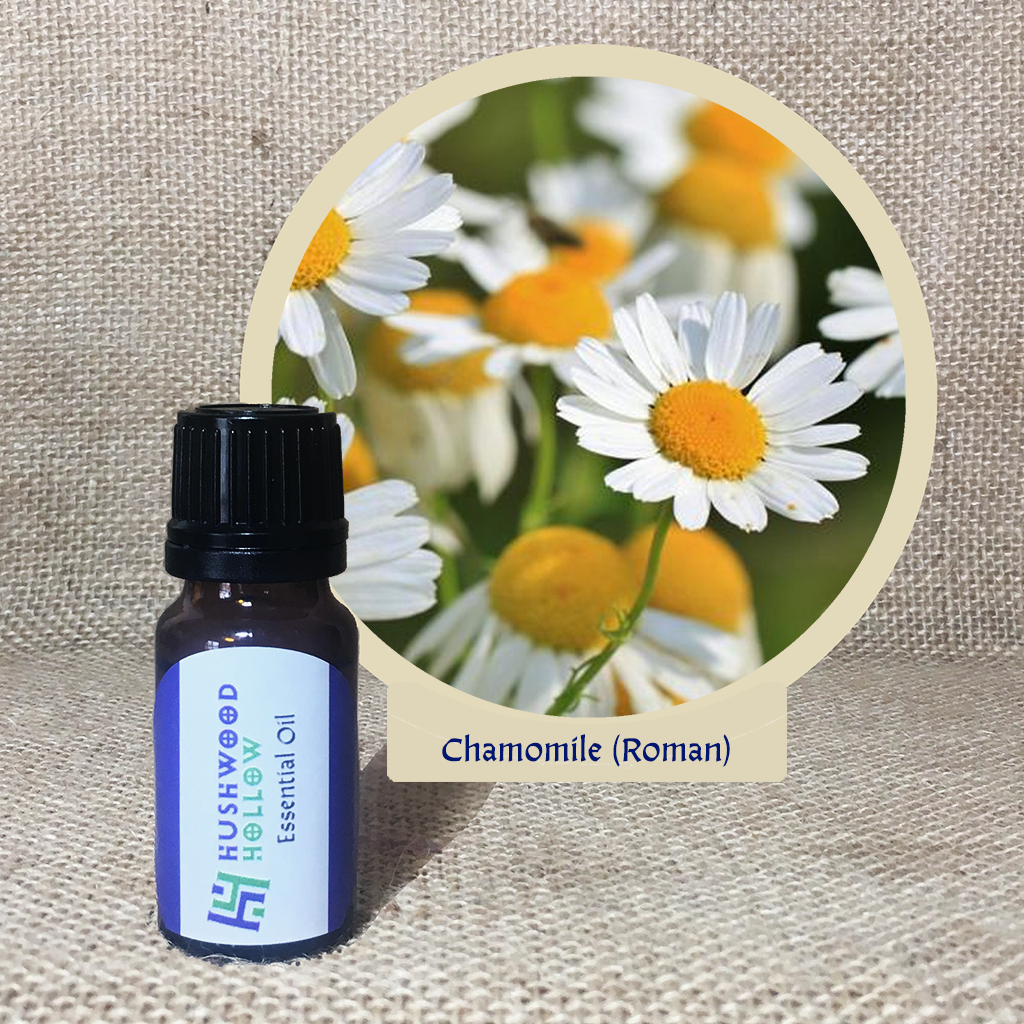 Chamomile Roman 5% - Pure Therapeutic Grade Essential Oil - Hushwood Hollow