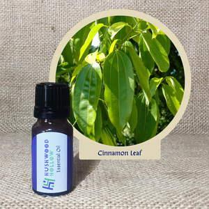 Cinnamon Leaf - Pure Therapeutic Grade Essential Oil