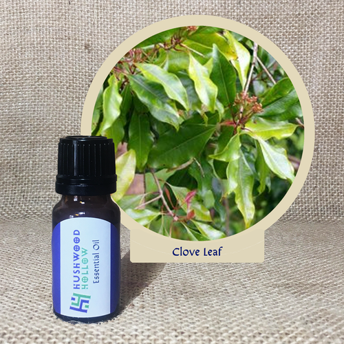 Clove Leaf - Pure Therapeutic Grade Essential Oil - Hushwood Hollow