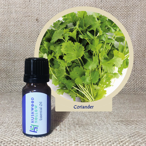 Coriander - Pure Therapeutic Grade Essential Oil - Hushwood Hollow