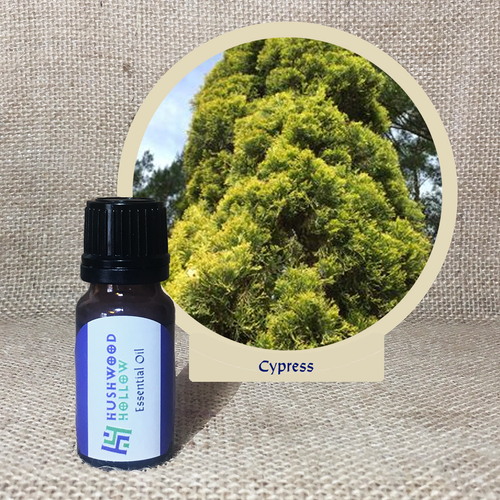 Cypress - Pure Therapeutic Grade Essential Oil - Hushwood Hollow
