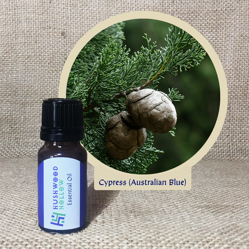 Cypress (Australian Blue) - Pure Therapeutic Grade Essential Oil